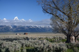 Yellowstone 5-13 419