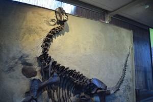 Dino 53 10-15 194