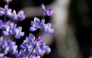 Wildflowers 3-16 5300 028