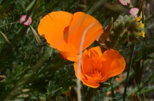 wildflowers 3-16 7100 042